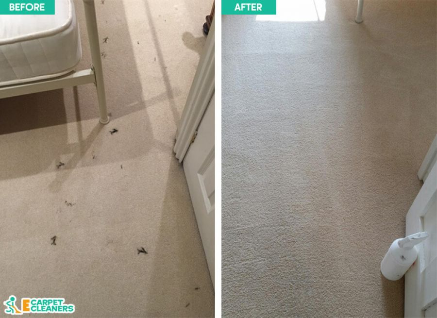 Carpet Cleaning Service Harringay