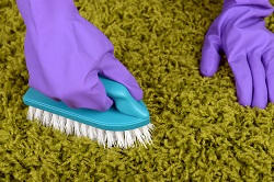 Dry Foam Carpet Cleaning